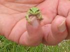 花冷えの初蛙